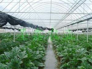 蔬菜大棚骨架 蔬菜种植大棚支架 圣鑫农业