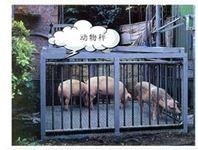 合肥3吨动物专用电子称哪有卖