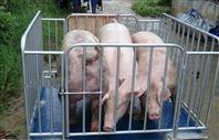 2吨动物秤,2吨牲畜地磅带围栏