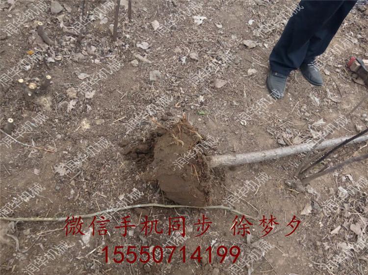 【裸根挖树机】汽油挖树机价格 便携式断根挖树机