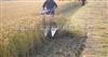 山区水稻收割机,进口大型水稻收割机,东北水稻收割机,雷沃水稻收割机,小型收割机 稻麦收割机 水稻收割机